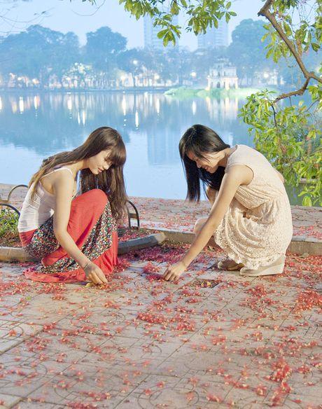 Hoa loc vung ben Ho Guom - Anh 2
