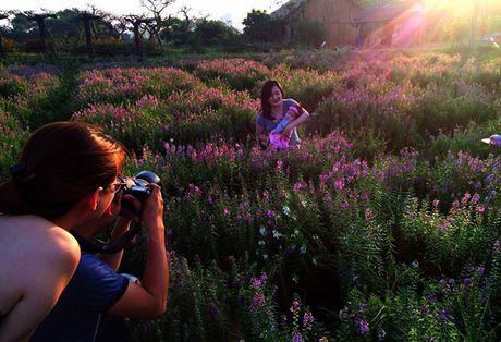 Thao nguyen hoa tuyet dep de chup anh cuoi o Ha Noi - Anh 3