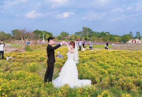Thao nguyen hoa tuyet dep de chup anh cuoi o Ha Noi - Anh 8