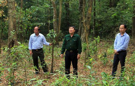 Quang Tri giao, khoan bao ve rung: Loi nhieu nhung bat cap khong it - Anh 1