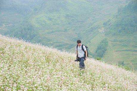 Ngam hoa tam giac mach no som o Bac Ha, Lao Cai - Anh 3