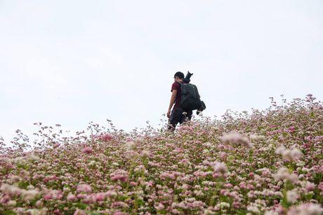 Ngam hoa tam giac mach no som o Bac Ha, Lao Cai - Anh 7