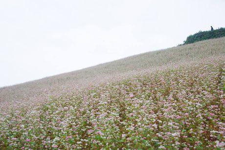 Ngam hoa tam giac mach no som o Bac Ha, Lao Cai - Anh 8