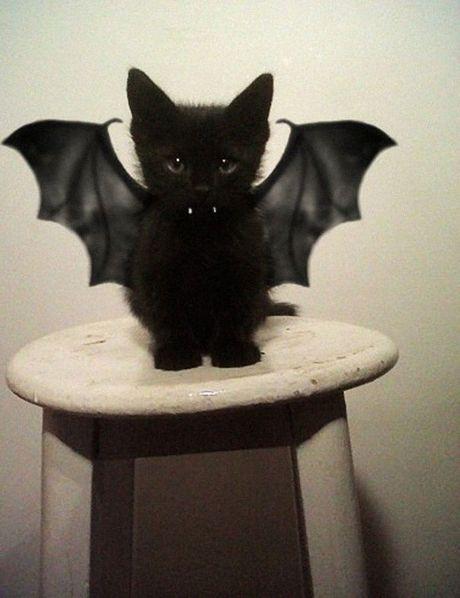Cuoi sac my tom voi dam thu cung dien trang phuc Halloween - Anh 2