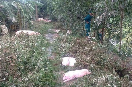 Nuoc mat nguoi Quang Binh tuon roi khi lu du cuon sach tai san - Anh 1