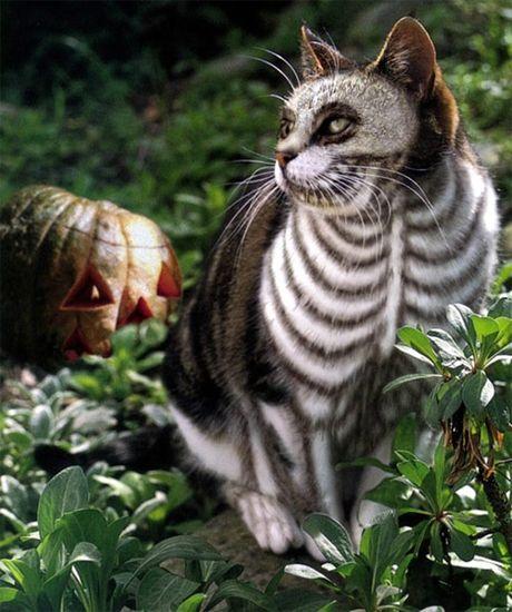 Chon do cho cac be meo di choi hoi Halloween - Anh 3
