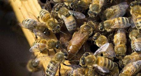 Trung tam thu tinh nhan tao ong dau tien tai Lebanon - Anh 1