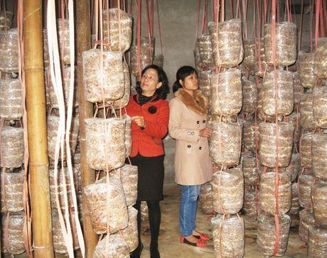 Lao Cai: Ho tro dao tao nghe cho lao dong nong thon - Anh 1