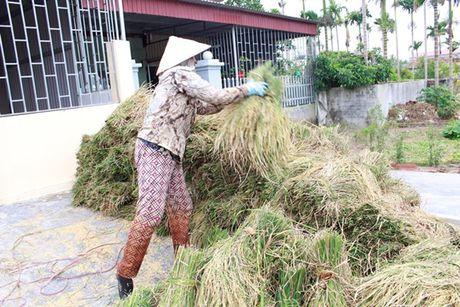 Quang Ninh – Hai Phong: Dan tran chong bao so 7 - Anh 2