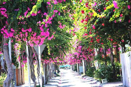 'Lac' vao cung duong hoa giay dep nhat Nha Trang - Anh 1