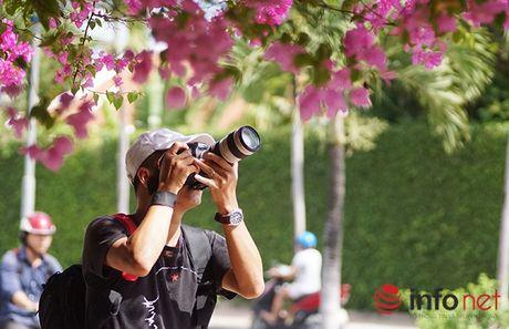 'Lac' vao cung duong hoa giay dep nhat Nha Trang - Anh 7