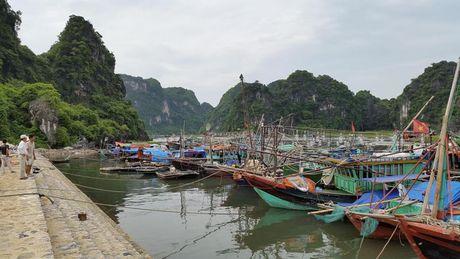 Pho Thu tuong Trinh Dinh Dung chi dao cong tac phong, chong bao tai Quang Ninh - Anh 4
