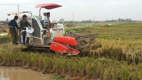Ninh Binh: Nguoi dan khan truong gat lua chay bao - Anh 5