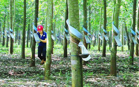 Cuu Thong doc: Hoang Anh Gia lai ban cao su cho Trung Quoc la quyen cua doanh nghiep - Anh 1