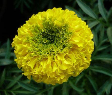 Nhung loai hoa dep va co loi cho suc khoe - Anh 11