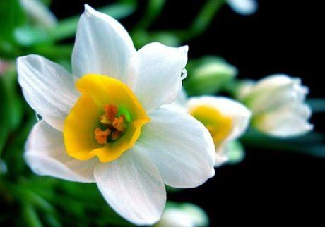 Nhung loai hoa dep va co loi cho suc khoe - Anh 12
