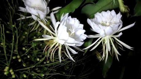 Nhung loai hoa dep va co loi cho suc khoe - Anh 15