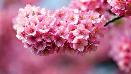 Nhung loai hoa dep va co loi cho suc khoe - Anh 16
