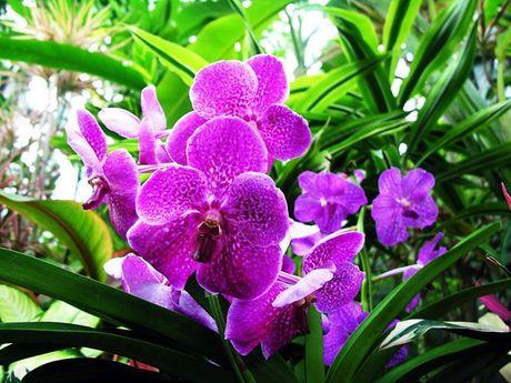 Nhung loai hoa dep va co loi cho suc khoe - Anh 5