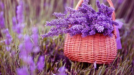 Nhung loai hoa dep va co loi cho suc khoe - Anh 6