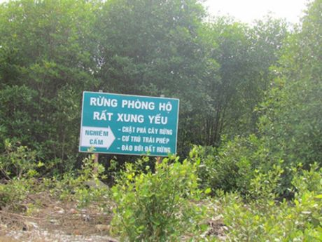 Dau tu Chuong trinh quan ly, bao ve rung dac dung, rung phong ho - Anh 1