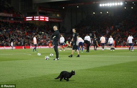 BAN TIN The thao: Liverpool hoa M.U vi bi meo 'am que' - Anh 1