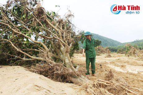 Huong Khe: Hang tram hec-ta buoi Phuc Trach tan hoang sau lu! - Anh 4