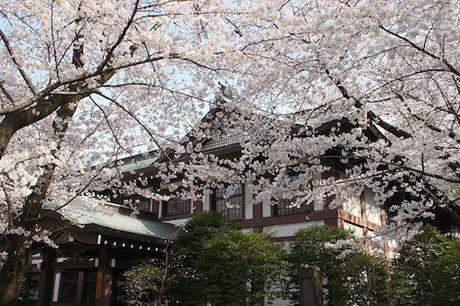 Yasukuni – ngoi den gay tranh cai nhat Nhat Ban - Anh 7