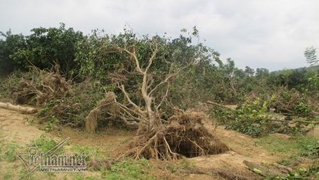 Xot xa buoi dac san Phuc Trach dung lam cui sau lu - Anh 1