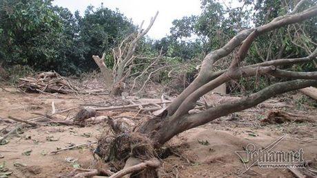 Xot xa buoi dac san Phuc Trach dung lam cui sau lu - Anh 3