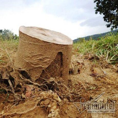 Xot xa buoi dac san Phuc Trach dung lam cui sau lu - Anh 4