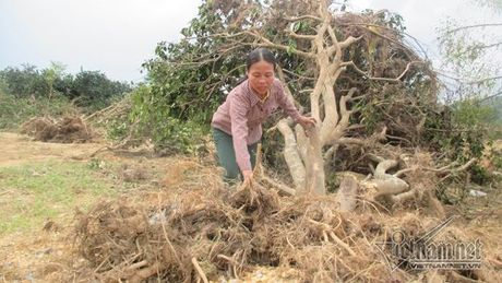 Xot xa buoi dac san Phuc Trach dung lam cui sau lu - Anh 5