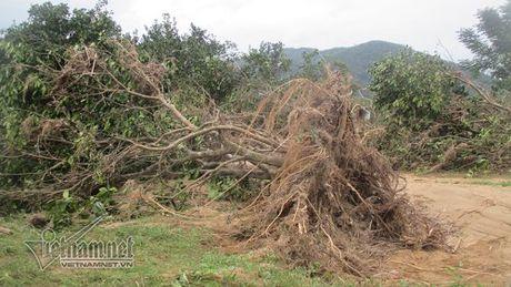 Xot xa buoi dac san Phuc Trach dung lam cui sau lu - Anh 7