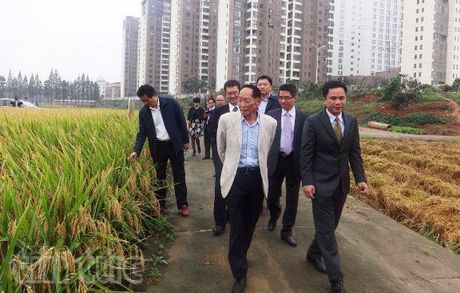 Lua chiu man Trung Quoc cay thu kha quan o Kien Giang - Anh 1