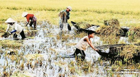 Kien Giang chuyen ho so dieu tra vu an chan tien han, man Vinh Thuan - Anh 1