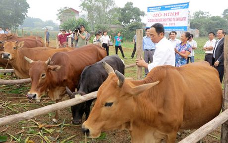 Chan nuoi gia suc, gia cam: Chon dung the manh de 'gui vang' xuat khau - Anh 1