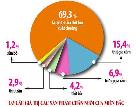 Chan nuoi gia suc, gia cam: Chon dung the manh de 'gui vang' xuat khau - Anh 2