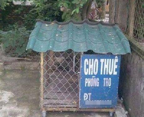 Nhung bien bao, bang hieu 'kho hieu' nhat Viet Nam - Anh 3