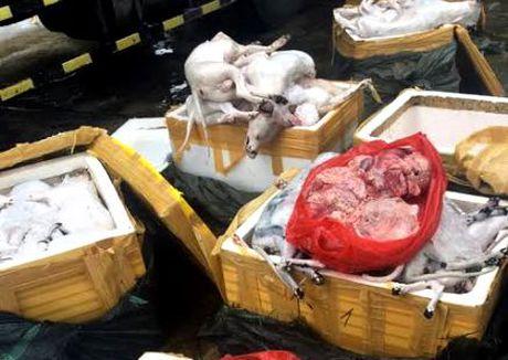 Thanh Hoa: Phat hien bat giu gan 700kg thit cho, meo khong ro xuat xu - Anh 1