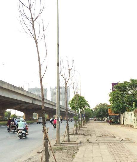 Cay moi chong chet hang loat tren pho Nguyen Xien, Nghiem Xuan Yem - Anh 1