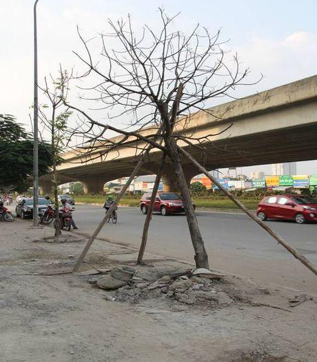 Cay moi chong chet hang loat tren pho Nguyen Xien, Nghiem Xuan Yem - Anh 4