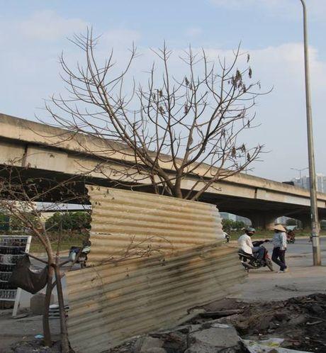 Cay moi chong chet hang loat tren pho Nguyen Xien, Nghiem Xuan Yem - Anh 5