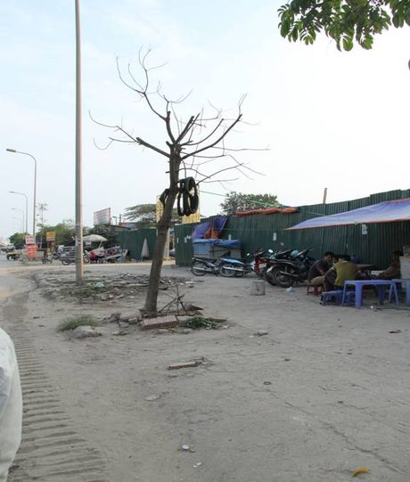 Cay moi chong chet hang loat tren pho Nguyen Xien, Nghiem Xuan Yem - Anh 6