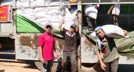 Ho tro khan cap gao du tru quoc gia cho nhan dan Quang Binh - Anh 1
