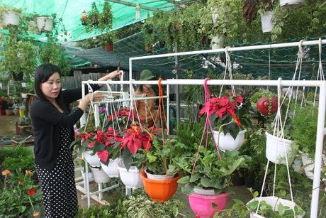 Tu tao co hoi: Ban hoa, cay canh qua mang - Anh 1