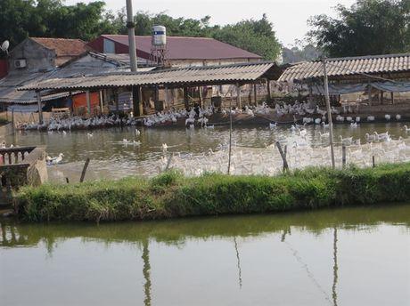 Vinh Tuong tao dien mao moi - Anh 3
