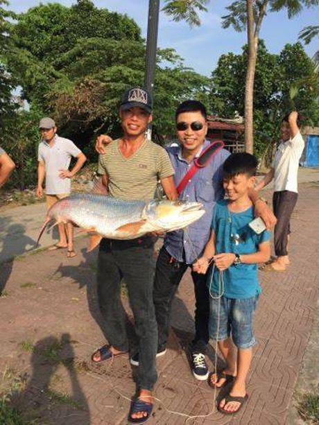 Can canh 'thuy quai song Da' mac cau can thu Hai Phong - Anh 1