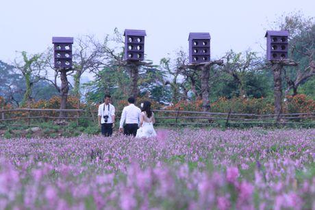 Dam minh trong vuon hoa ngoc han tim giua long Ha Noi - Anh 8