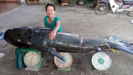 Bat ca uc khung nang 130kg tren song Serepok - Anh 1