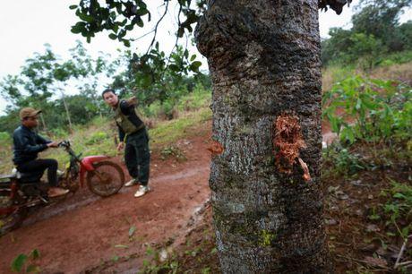 Phat lenh truy na nghi can ban chet 3 bao ve rung o Dak Nong - Anh 1